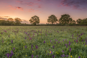 Orchid Meadow Sunrise